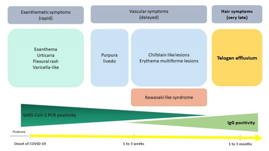 Diferentes manifestaciones dermatológicas asociadas a COVID-19 según su momento de aparición